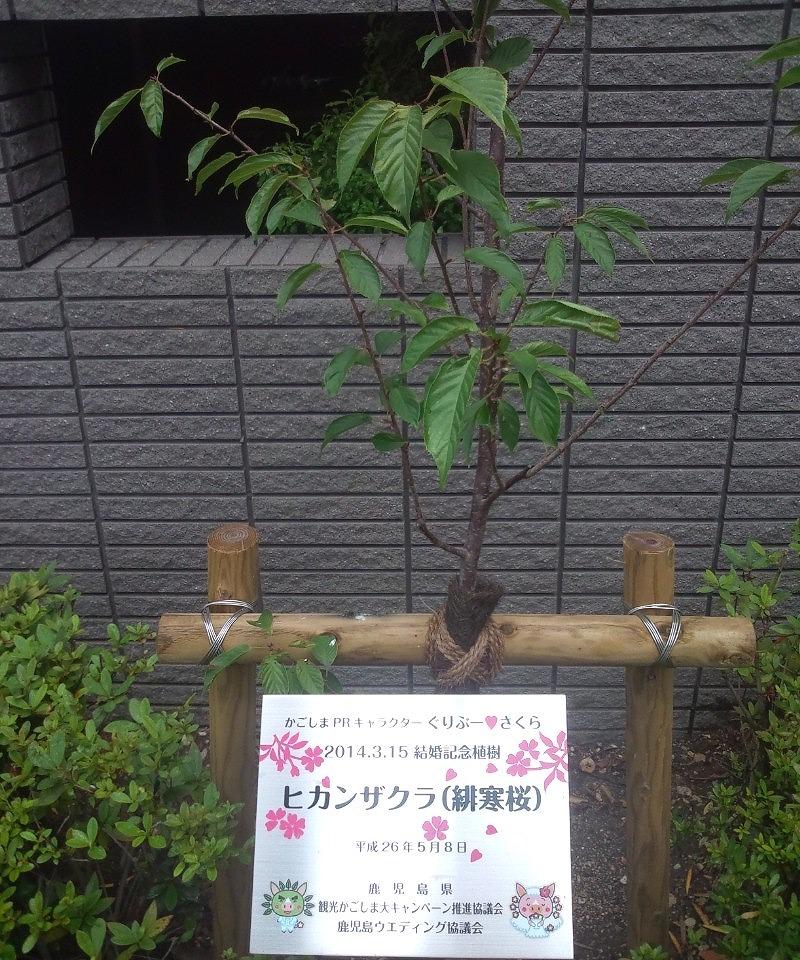 gurisaku_shokuju
