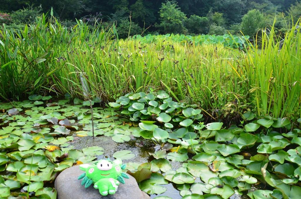 水生植物園ビオトープ